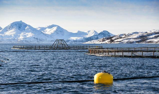 Photo: Are Kvistad, Sjømat Norge