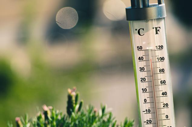 thermometer in green surroundings