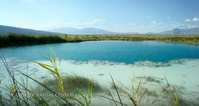 MEXICO: The global summit on biodiversity starts 4 December. Photo: Screenshot of video by COP13 organizers