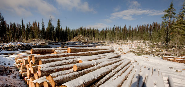 Logs in forest plantation. Photo: Lawrence Hislop/Grid Arendal